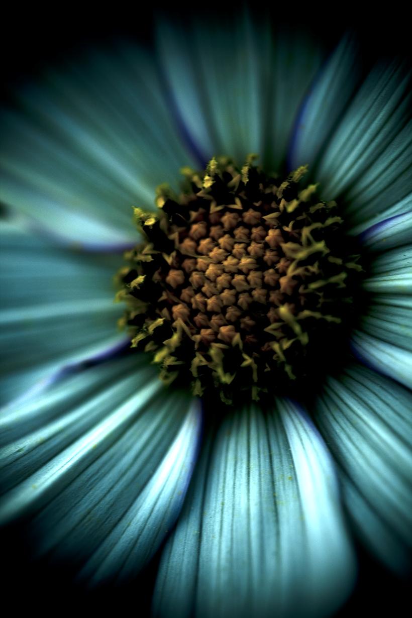 docher_fleurs2