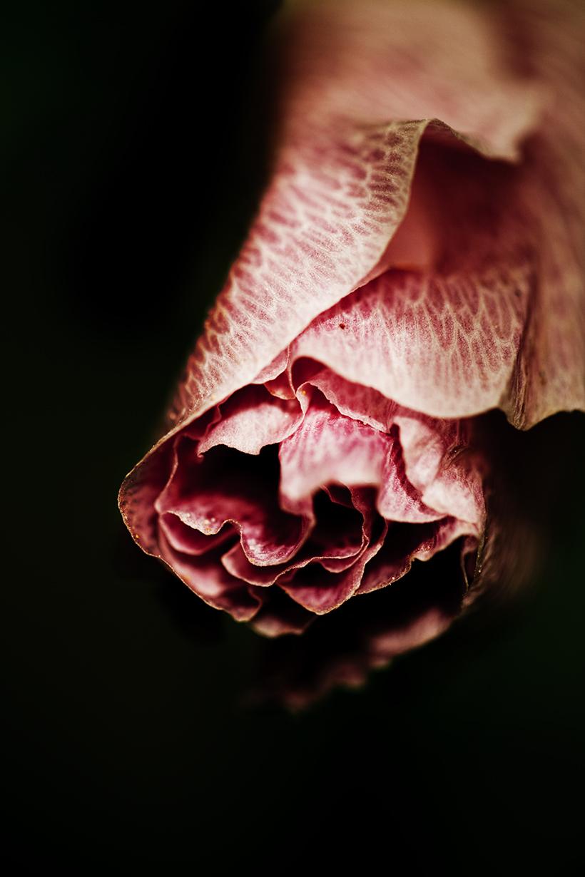 Docher_fleurs_Partie 3