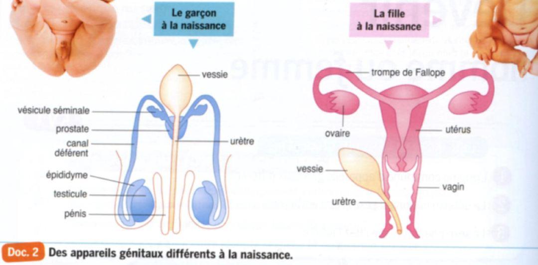 la trompe feminine