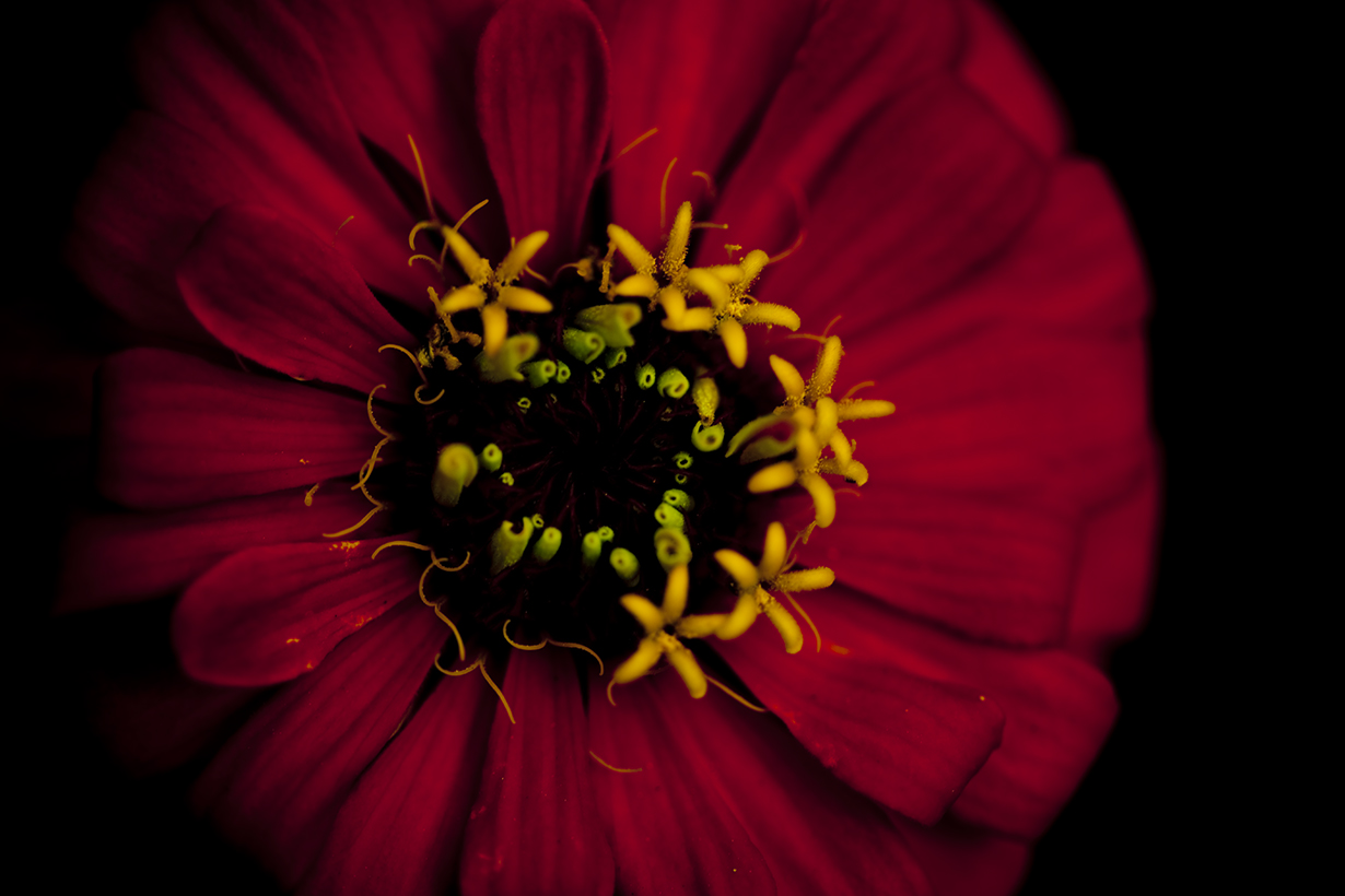 docher_fleurs_Partie 2
